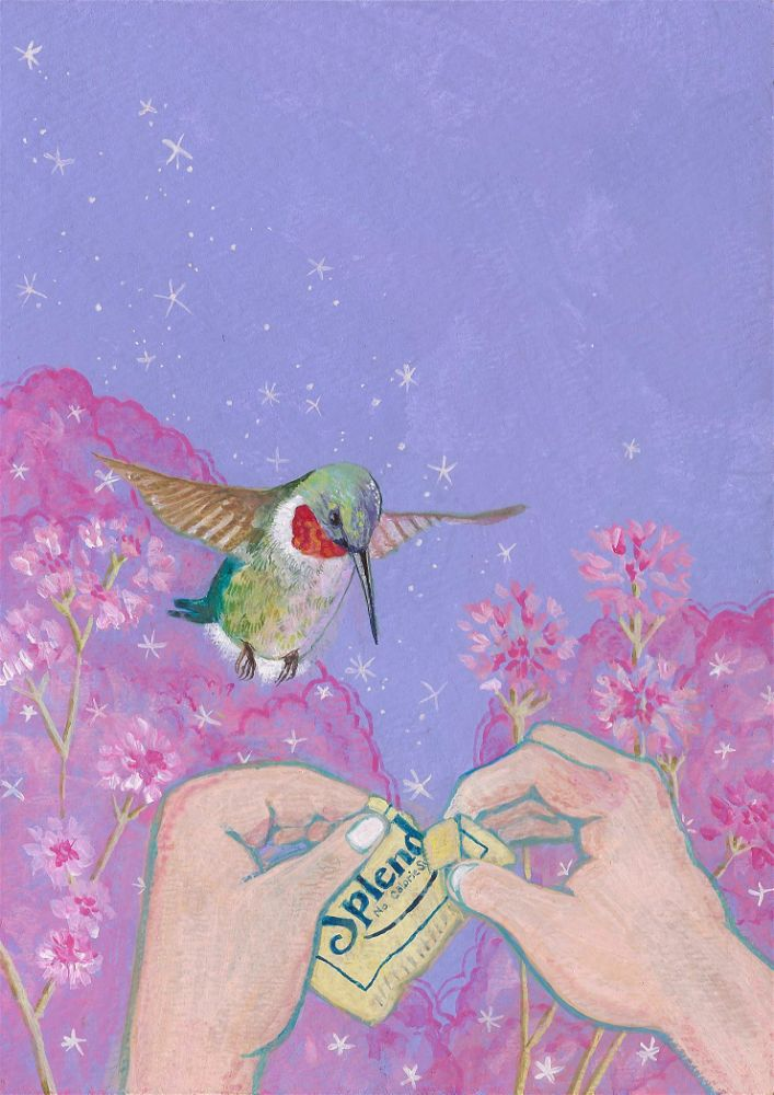 painting of a hummingbird and a Splenda packet